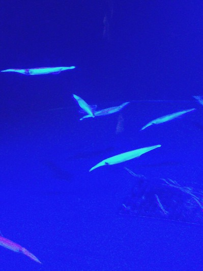 naoetsu_aquarium12.jpg